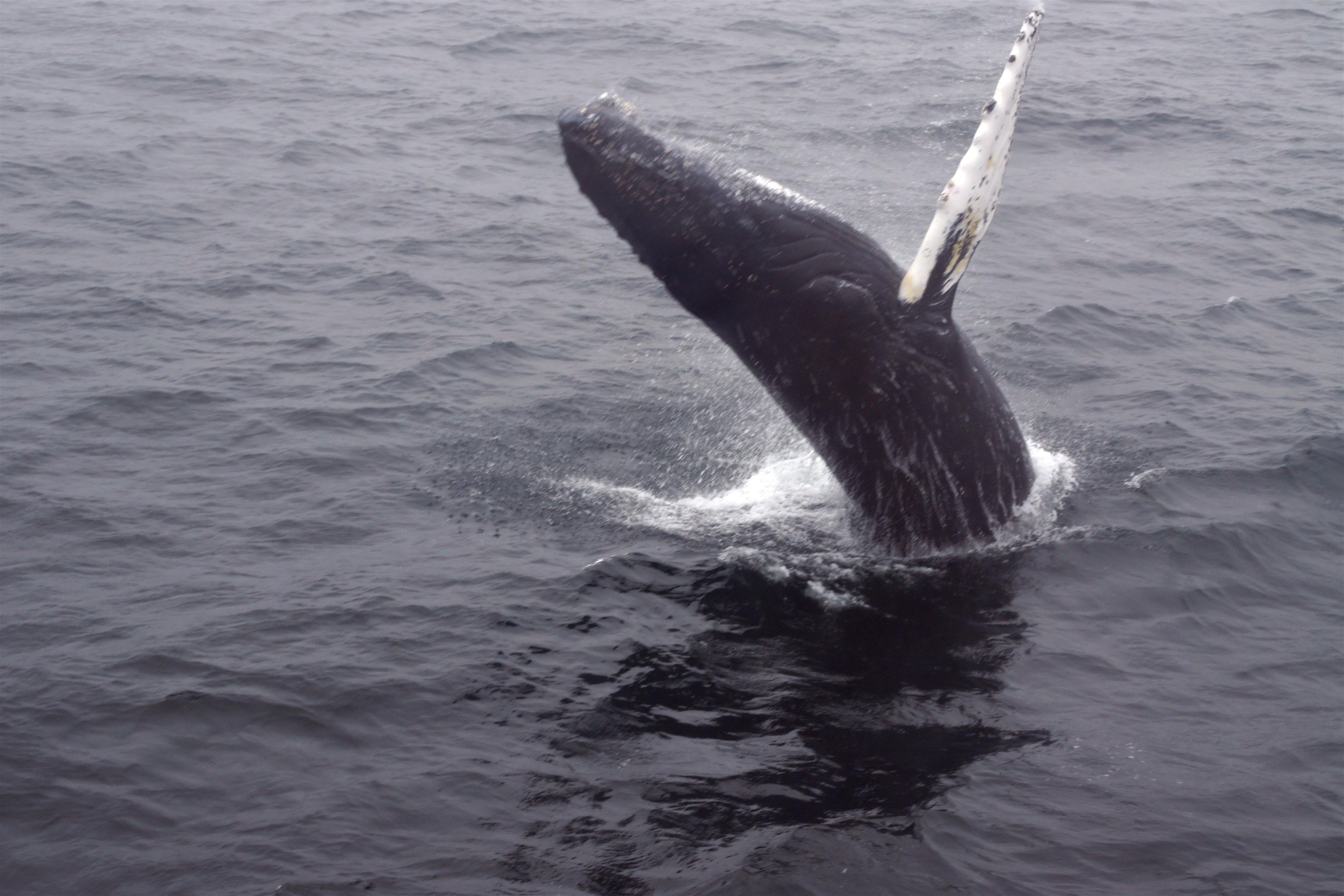 Moby dick marine massachusetts