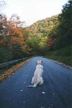 Leigh Brill Singh's beloved dog, Slugger, was always ready to hit the road.