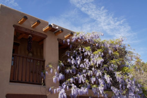 Adobe and wisteria, Santa Fe