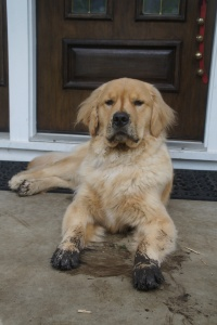 What?  Me digging?  I haven't been digging.  Spring for dog-lovers.