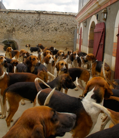 Don't fall into this melee of hunting hounds at the Chateau de Cheverny in France--you'll be enveloped.