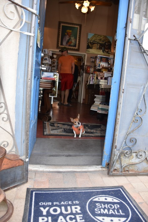 Chihuahua looking out of doorway in Mesillia, NM www.offthebeatenpagetravel.com
